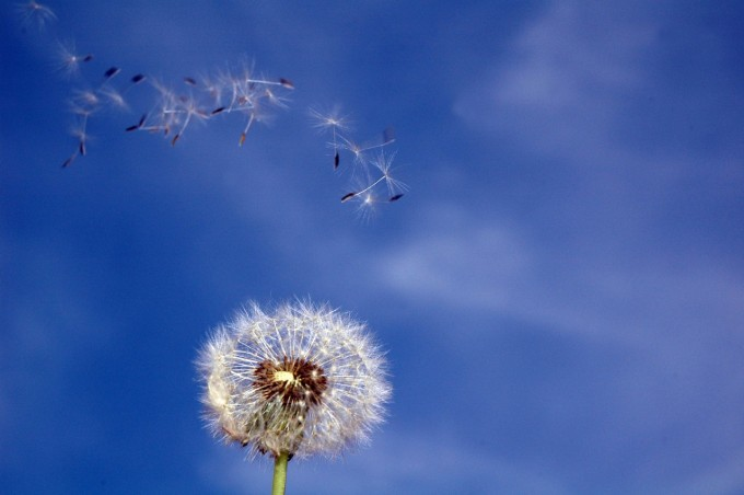 Układ immunologiczny w alergii