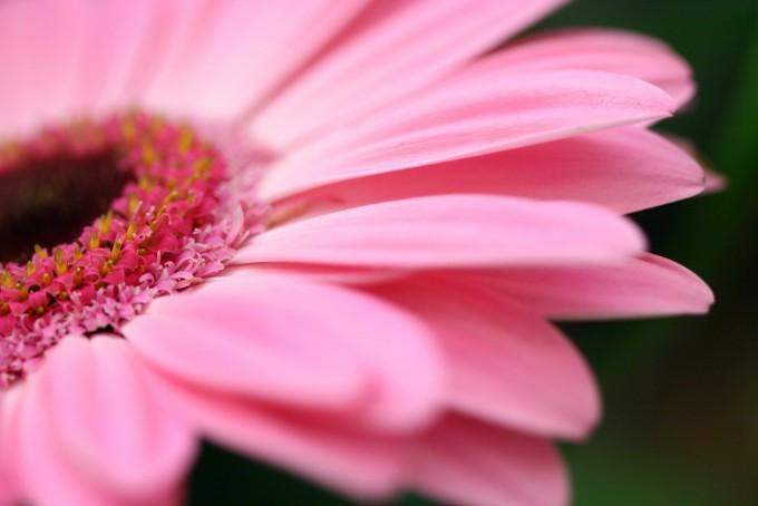 Wpływ karmienia piersią na nabycie odporności przeciw alergii u dzieci